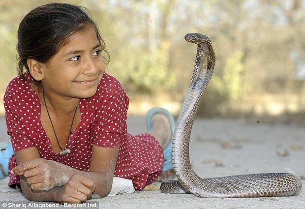 Kral kobraları ile arkadaşlık eden Hintli kız
